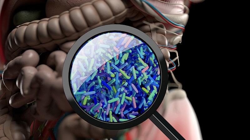 Link between Alzheimer's and intestinal microbiota